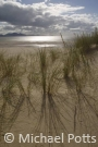 Backlit Marram