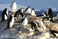 Chinstrap Penguins.   Hydrurga Rocks.  Antarctic Peninsula.